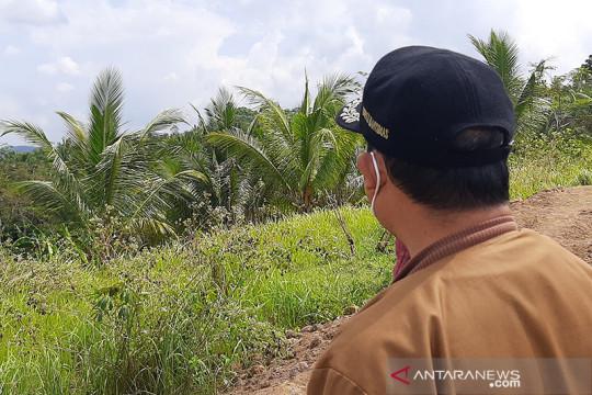 Banyumas siapkan peremajaan pohon kelapa penghasil nira