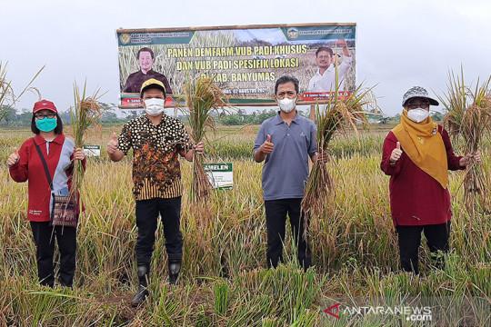 BPTP Jateng perkenalkan 11 varietas padi di Banyumas
