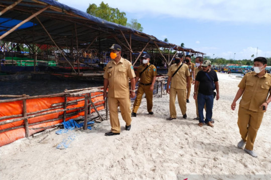 Produksi ubur-ubur di Belitung capai 240 ton per minggu