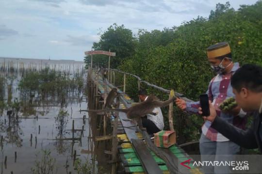 Babel benahi muara Sungai Kurau jadi desa wisata bahari