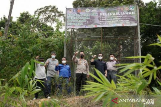 Jaga kelestarian satwa, PT Timah ikut lepasliarkan satwa di hutan Menumbing