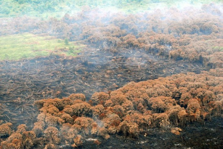 Number of hot spots in Sumatra down