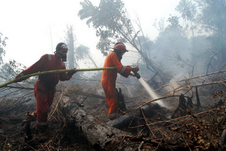 Minister reviews forest fires during Eid holidays