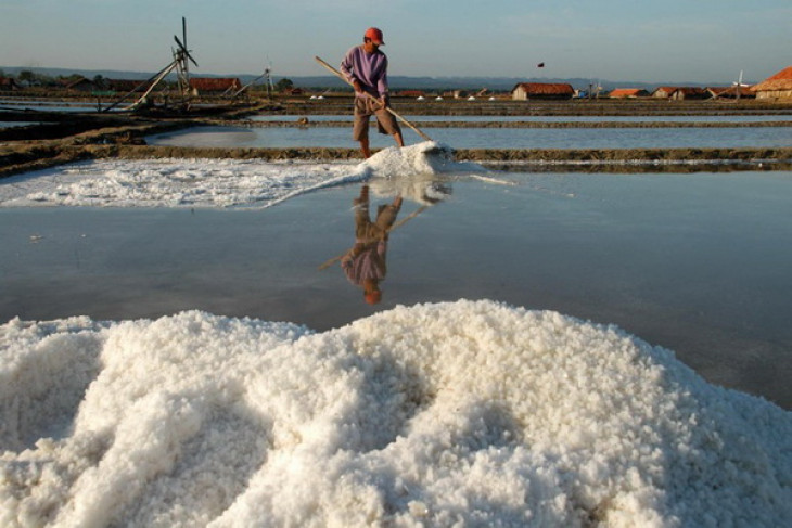 Minister hopes Indonesia can export salt in 2013