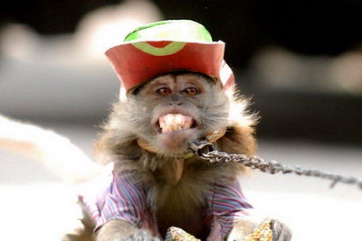 Jakarta conducts raid to end masked monkey performances on streets