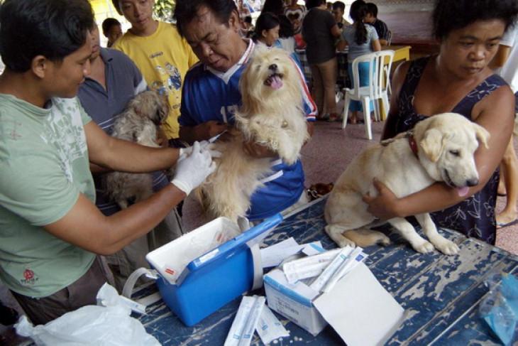 Bali to conduct  anti-rabies vaccination  drive