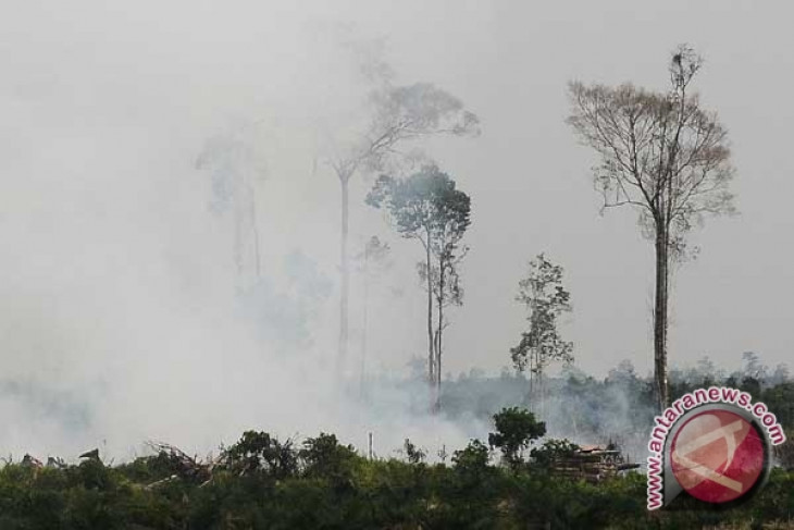 Up to 93 hotspots detected in Riau
