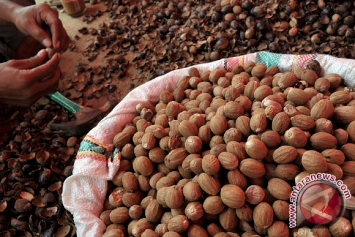 N. Sulawesi supplies 70% of world need for nutmeg