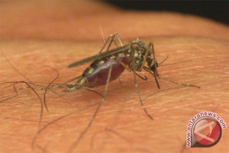 Malaria remains endemic in five Indonesian provinces