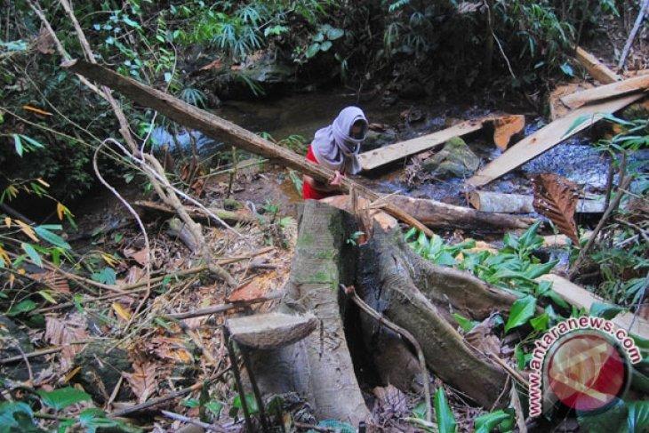 RI`s forest cutting moratorium begins gaining int`l acclaim