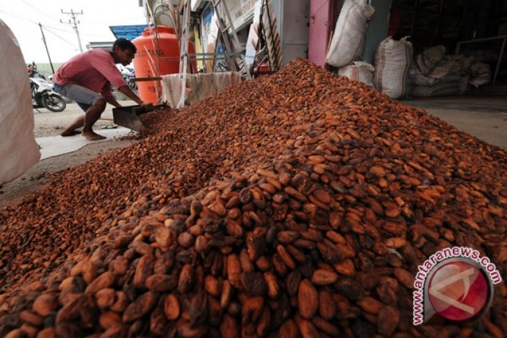 Three  Aceh subdistricts projected as nat`l cocoa cultivation centers