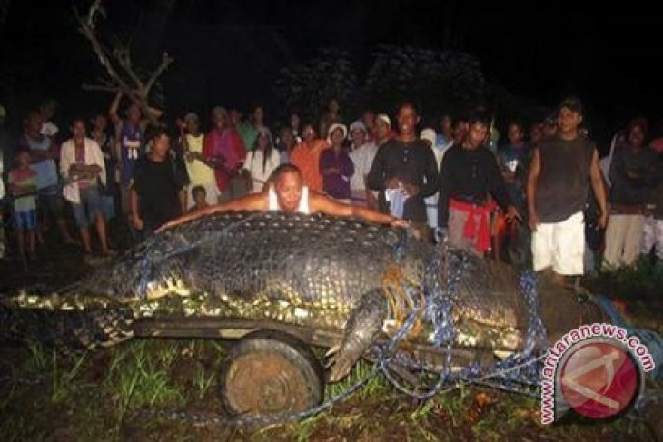 """Philippines catches """"largest"""" crocodile on record"""