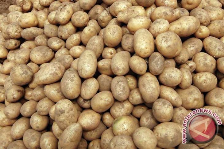 Khasiat kulit kentang, menyembuhkan luka hingga cegah anemia