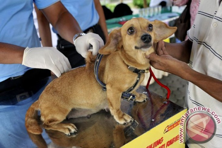 FAO provides 130 thousand rabies vaccines for Bali