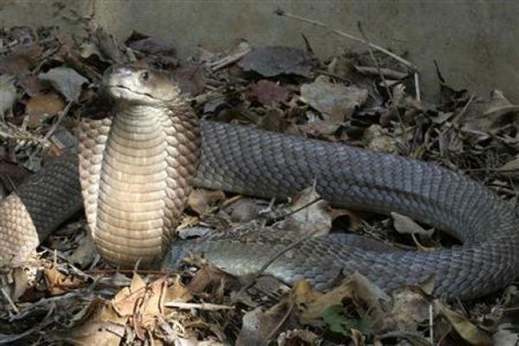 Researcher identifies 52 species of reptiles in W Sumatra
