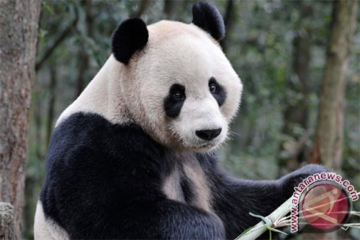 Indonesia, China to exchange komodo with panda