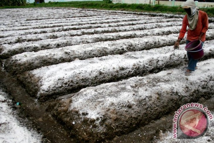 Bali government allocates Rp4 billion in subsidies for organic fertilizers