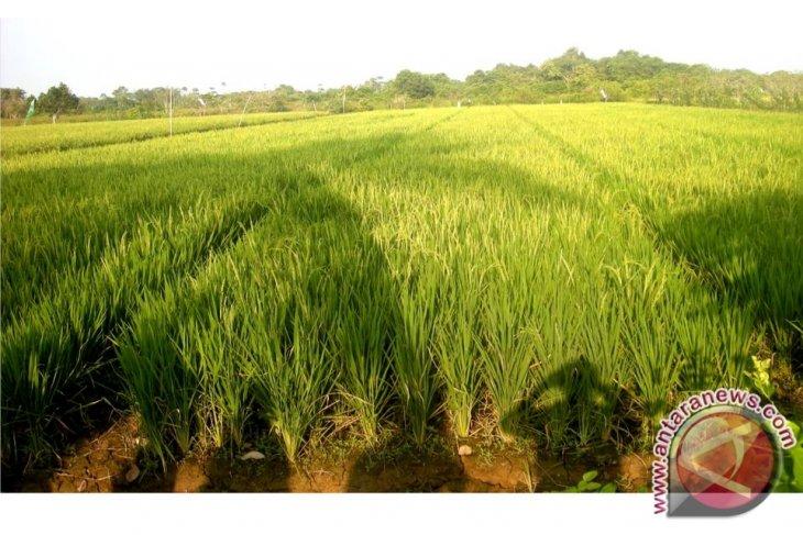 DPR Minta Pemprov Kaltim Fokus Bangun Pertanian