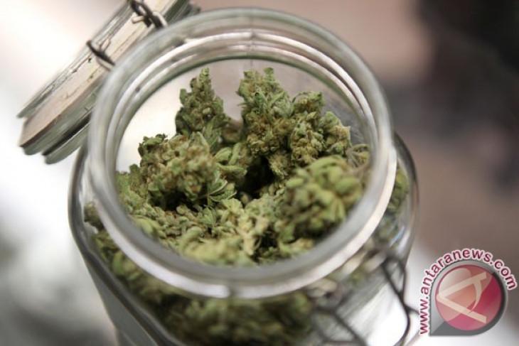 Demi ekonomi, Lebanon legalisasi tanam ganja untuk kebutuhan medis