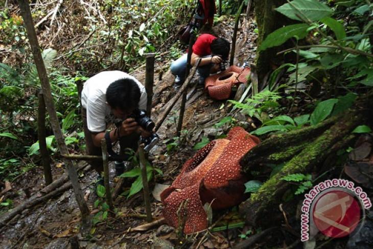Indonesia to send rafflesia arnoldii to South Korea flower festival