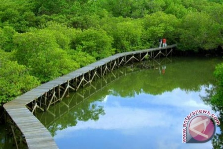 Hutan Mangrove Paloh Tujuan Wisata Favorit