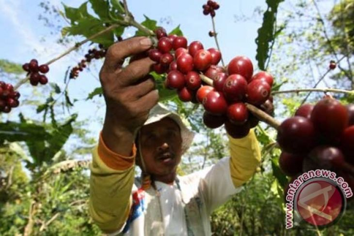 Bali`s coffee exports up 3.31 pct