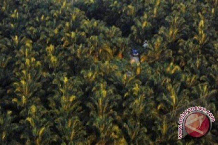 LAPSUS : Tanah Bumbu Berhasil Membangun Sektor Perkebunan