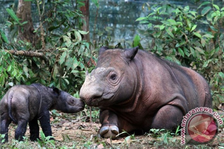 Safari Park celebrates World Rhino Day