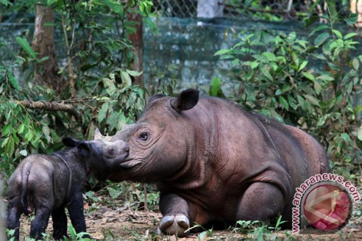 Park's administrator refuses transfer of sumatran rhinoceros to US