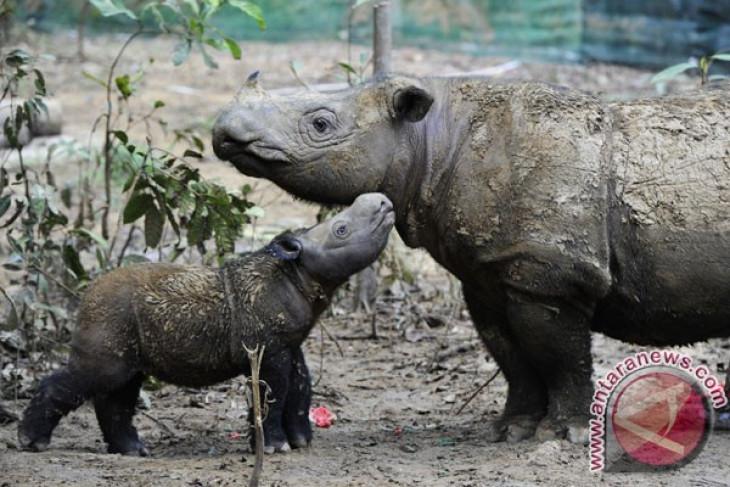 Indonesia, Malaysia collaborate for conservation of Sumatran Rhinoceros
