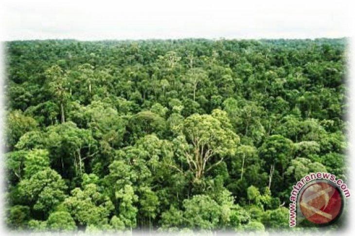 Tidak efektif, moratorium hutan perlu dievaluasi