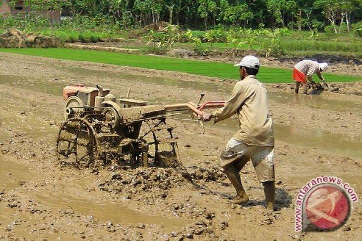Bupati Seluma imbau petani pertahankan sawah