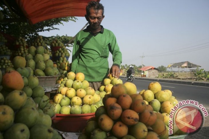 Govt to continue increasing quality, production of local fruits