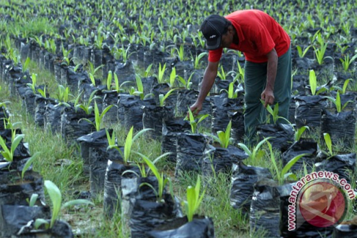 Ministry to draft regulation on sustainable palm oil