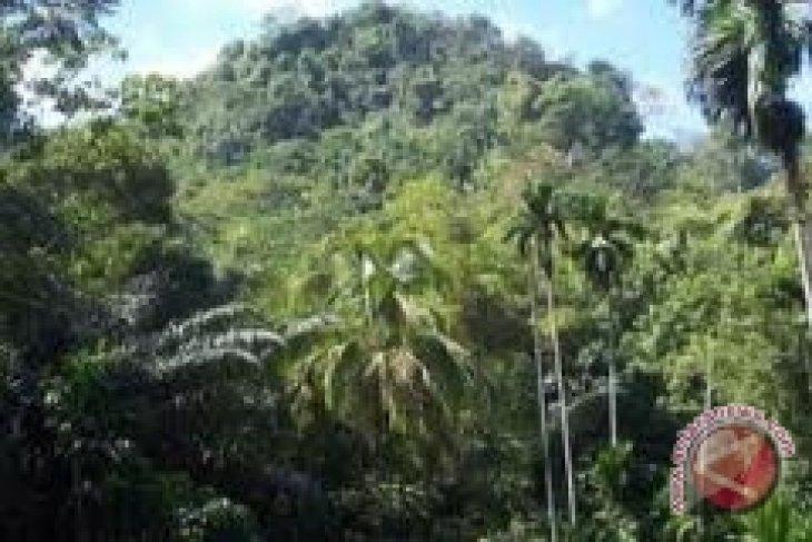 Kolaborasi Menuju Pengelolaan Hutan Rakyat Lestari