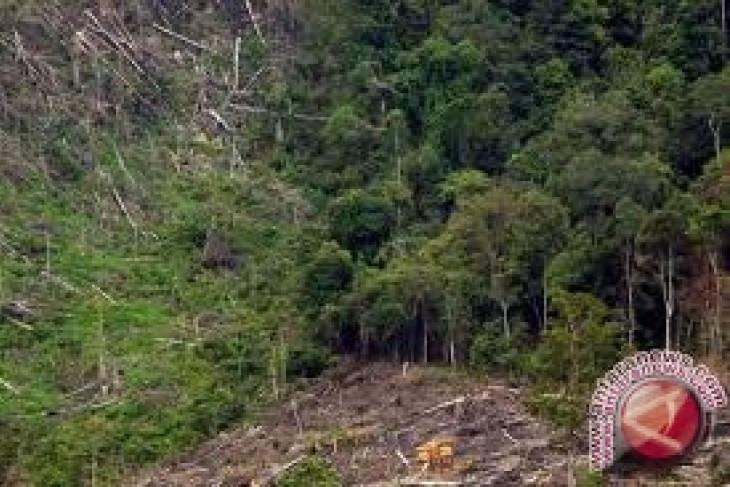 Dua warga Bengkulu Tengah ditangkap karena berkebun di hutan lindung