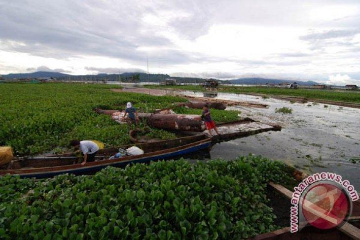 Water hyacinth silts up Lake Tondano