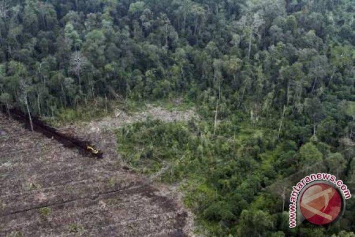 Ilmuwan Jepang kagumi gambut Riau