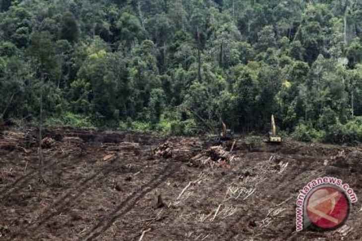 Restorasi Gambut Perlu Rp12 juta per Hektare