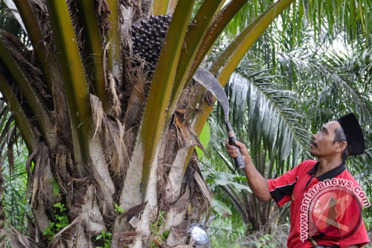 Extreme weather to hurt Indonesia`s 2013 CPO production