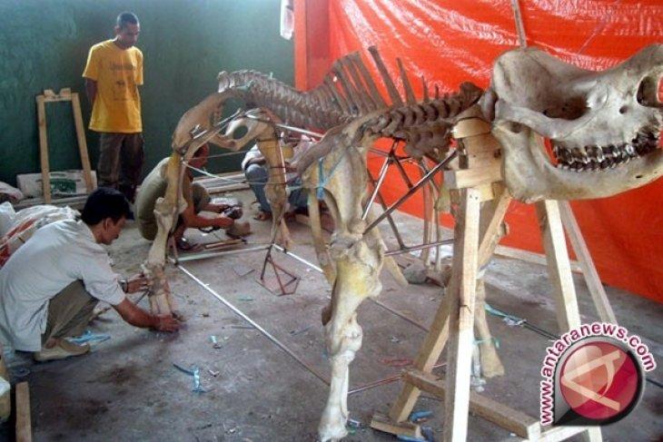 Jumlah Badak Jawa di Ujung Kulon Jadi 55