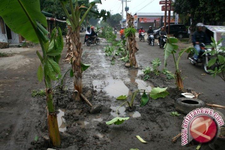 Warga tanami pohon pisang di jalan rusak