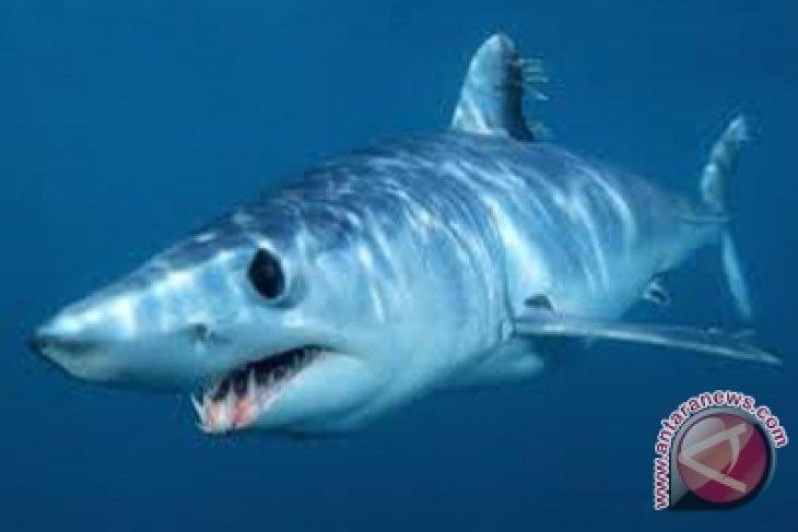 Serangan yang mengerikan hiu tewaskan seorang pria