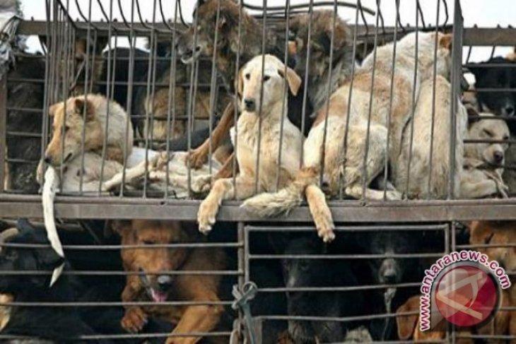 Pasar Jaya benarkan oknum pedagang jual daging anjing