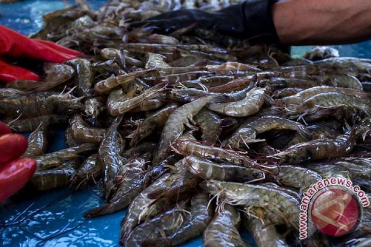 Prices of Indonesian shrimp surge