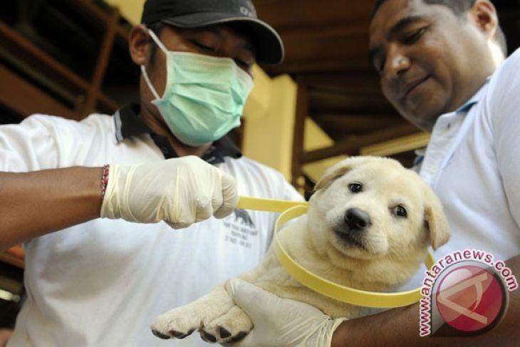 Bali allocates Rp6.18 billion to prevent, control rabies