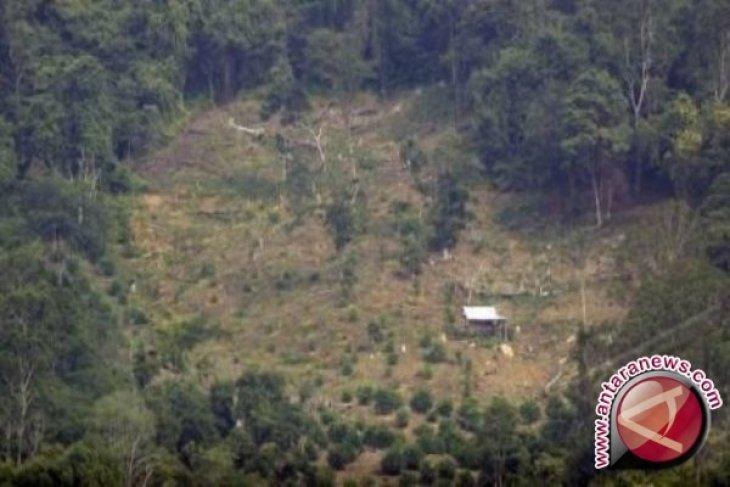 Aktivis ingatkan risiko alih fungsi kawasan hutan di Bengkulu