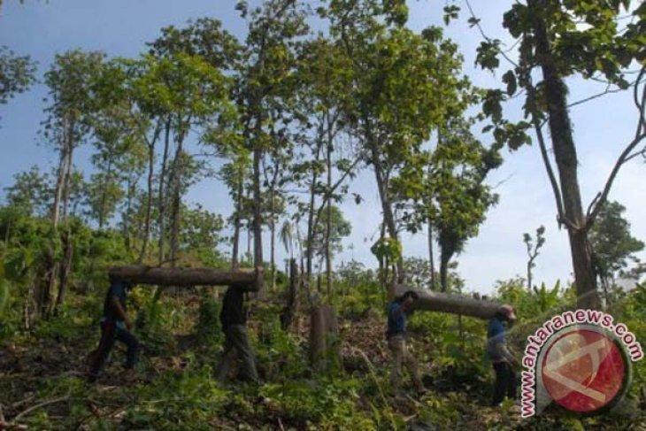HCSA Luncurkan Metodologi Gabungan Lindungi Hutan Alam