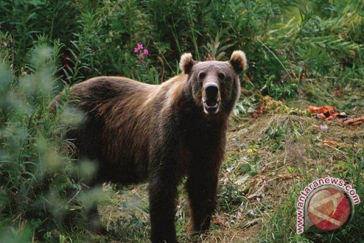BKSDA Terima Seekor Bayi Beruang Madu