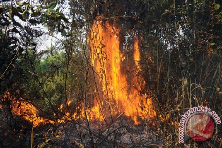 Nine already arrested over forest fires